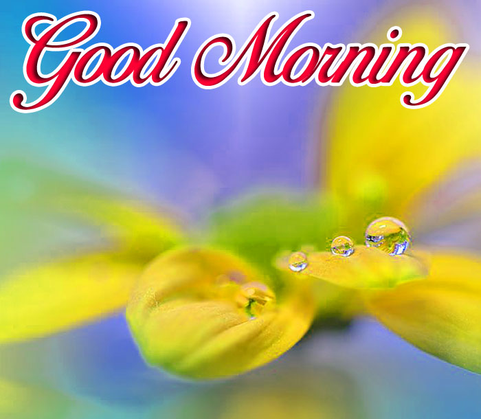latest yellow Good Morning flower hd