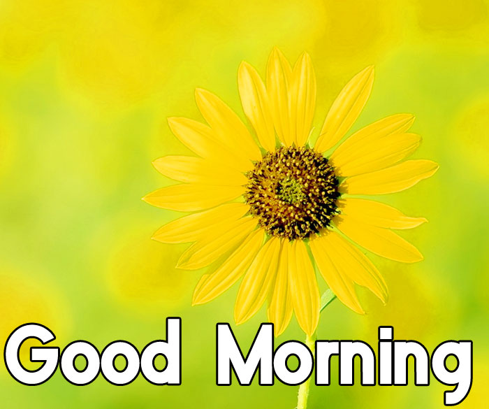 latest yellow Good Morning hd