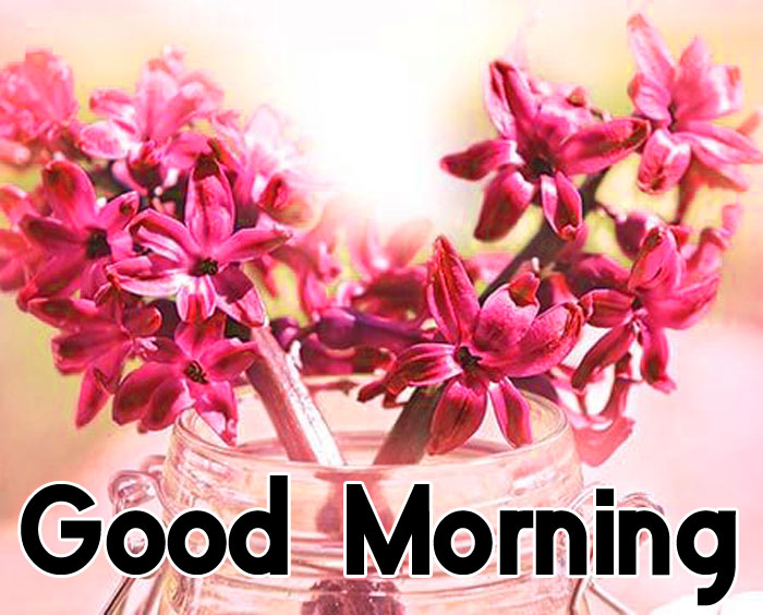 new ester flower Good Morning pics hd