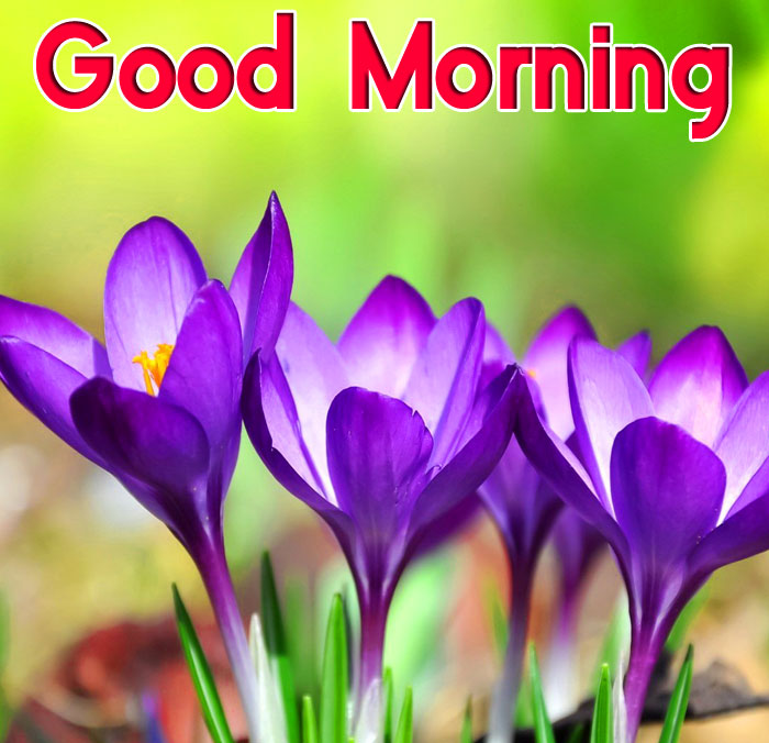new mcro flower Good Morning photo hd
