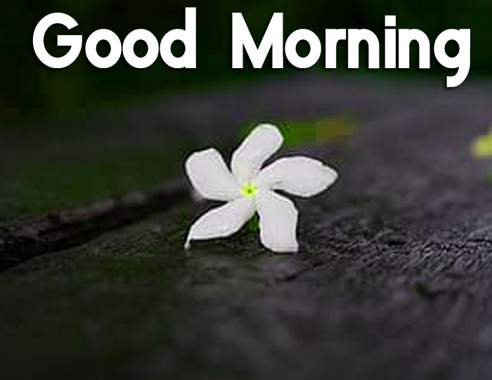 single white flower Good Morning images