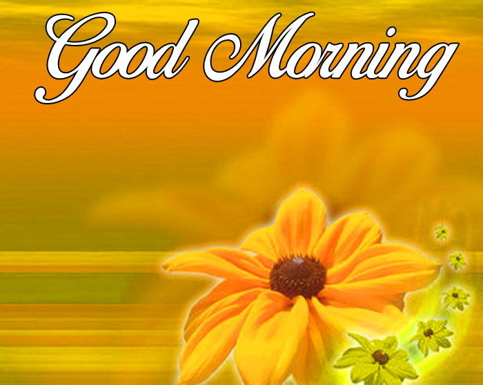 single yellow Good Morning flower hd