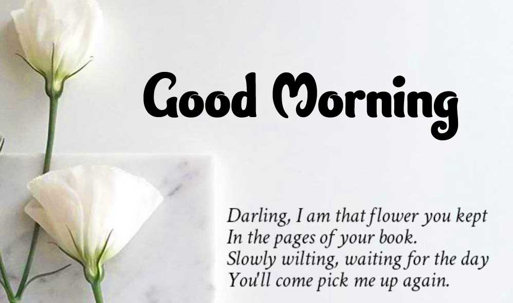 Beautiful Good Morning Greeting with Love Quote
