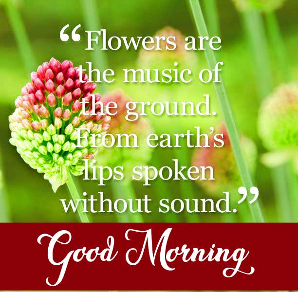 Beautiful Good Morning Greeting with Quote on Flowers