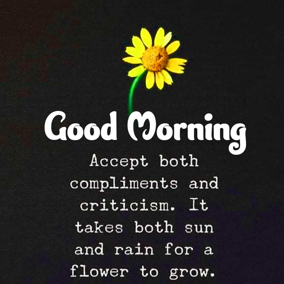 Best Quote with Flower Good Morning Pic