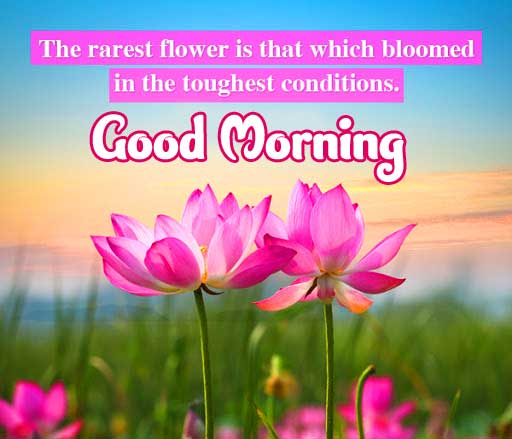 Flower Good Morning Picture with Quote