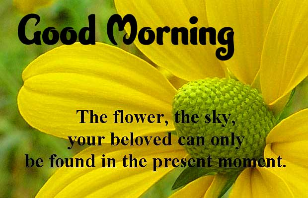 Flower Good Morning Picture