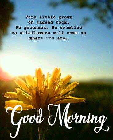 Flower Quote Good Morning Picture