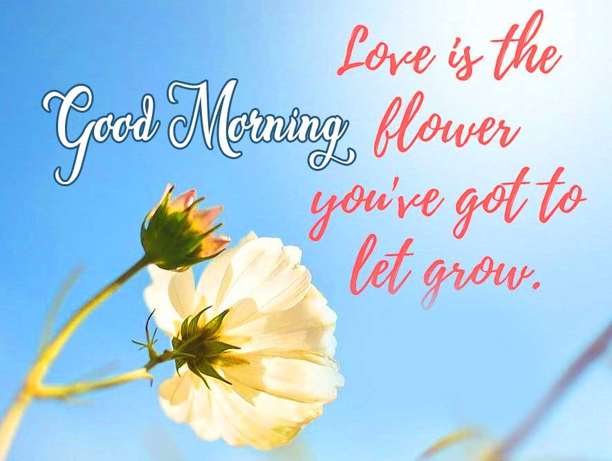 Good Morning Greeting with Flower Quote and Sunshine in the Background