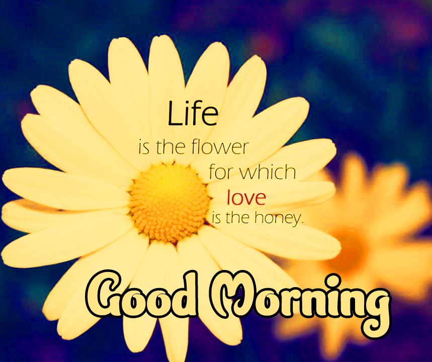 Good Morning Message with Life Quote on Flower