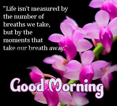 Good Morning Message with Pink Flowers and Quotes