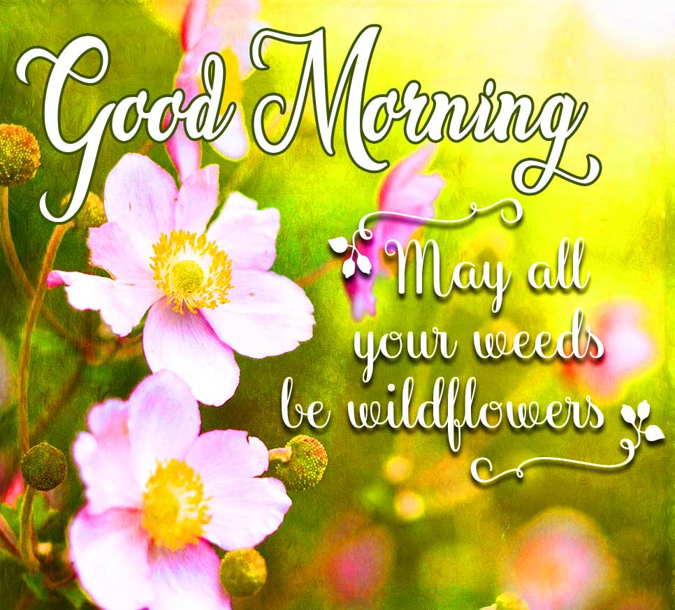 Good Morning Wishing with Quotes on Weeds and Wildflowers