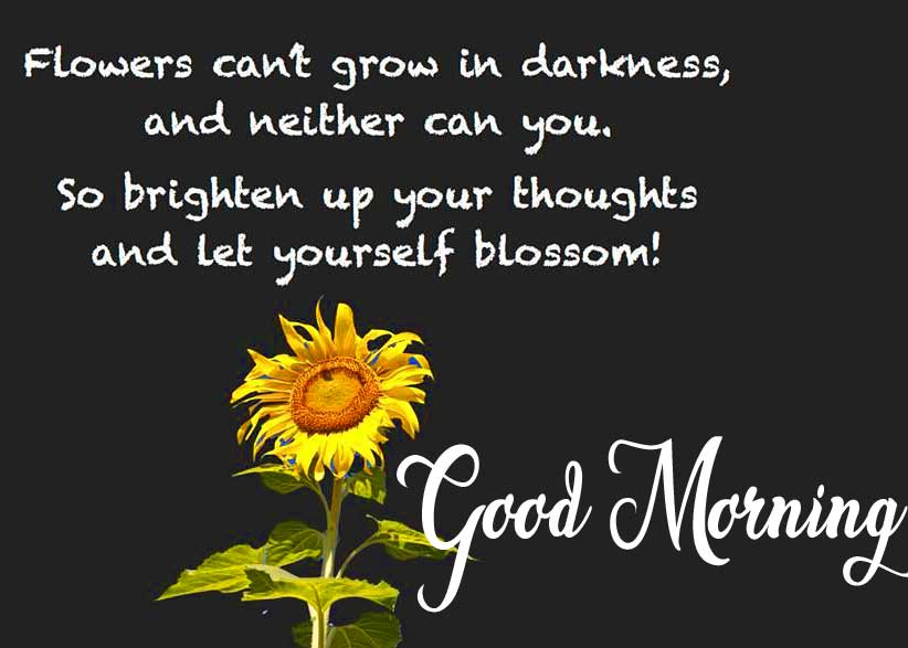 Good Morning Wishing with Royal Font and Quote