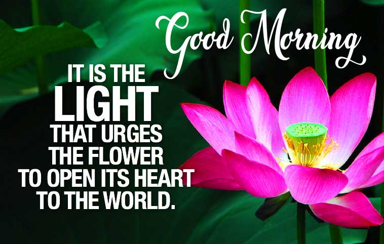 Inspiring Quote Image with Flower Good Morning Message