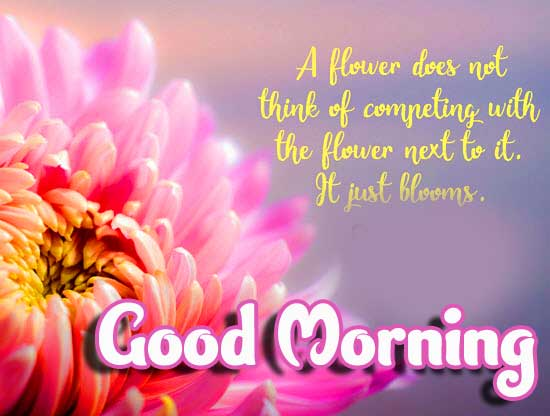 Life Quote on Flower Image with Good Morning Wishing