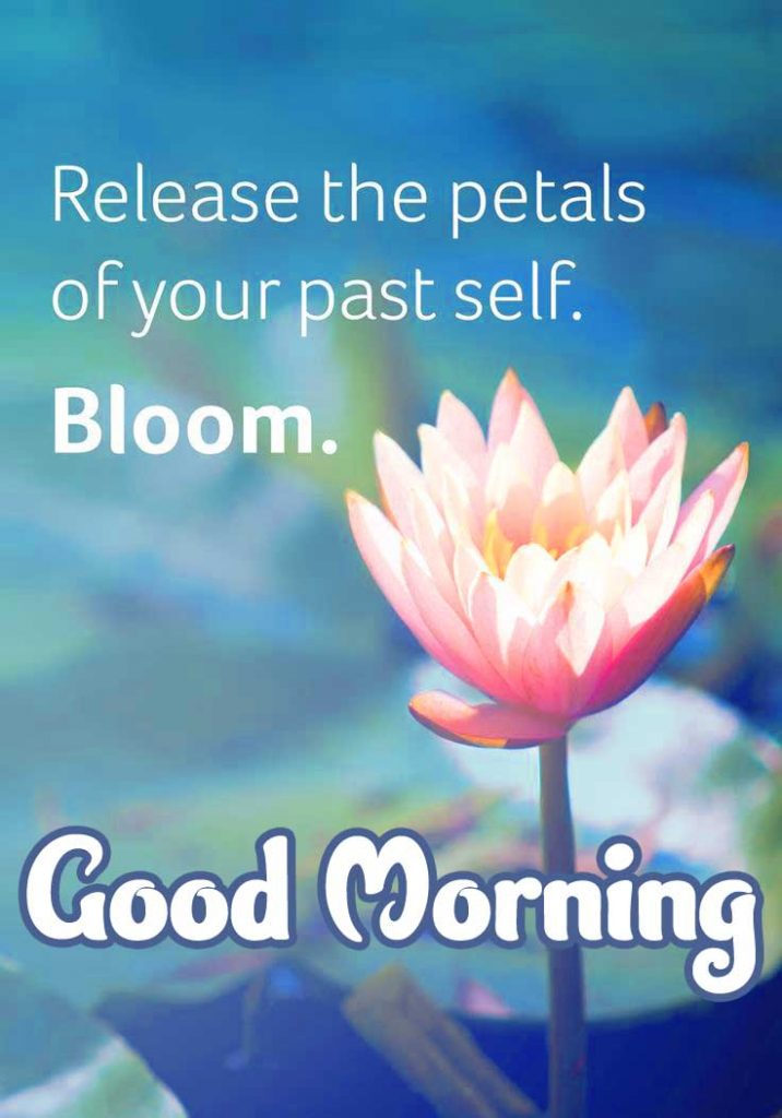 101+ Beautiful Good Morning Flowers Quotes (Latest Collections)