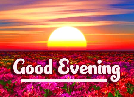 Lovely Good Evening Wishing with Purple Flowers in the Background