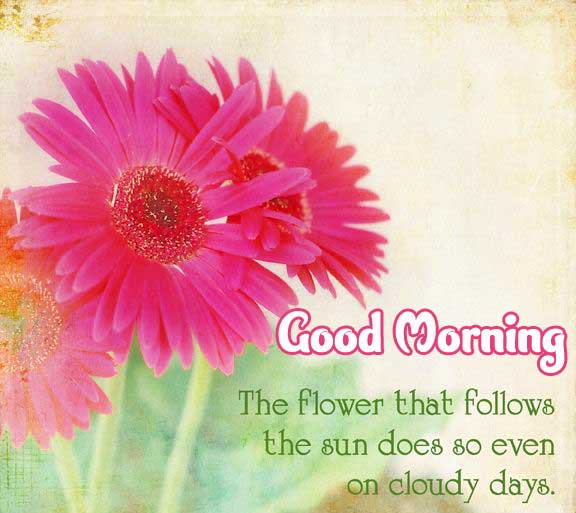 Lovely Pink Flower Good Morning Picture