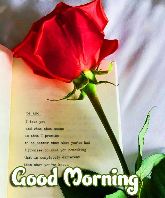 Rose Good Morning Pic with Romantic Quote