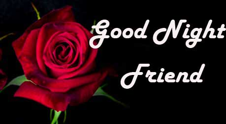 Rose Image with Good Night Message