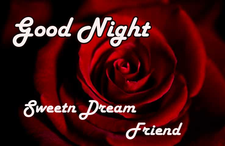 Rose with Dark Background and Good Night Message