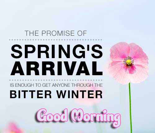 Spring Arrival Quote with Good Morning Wishing