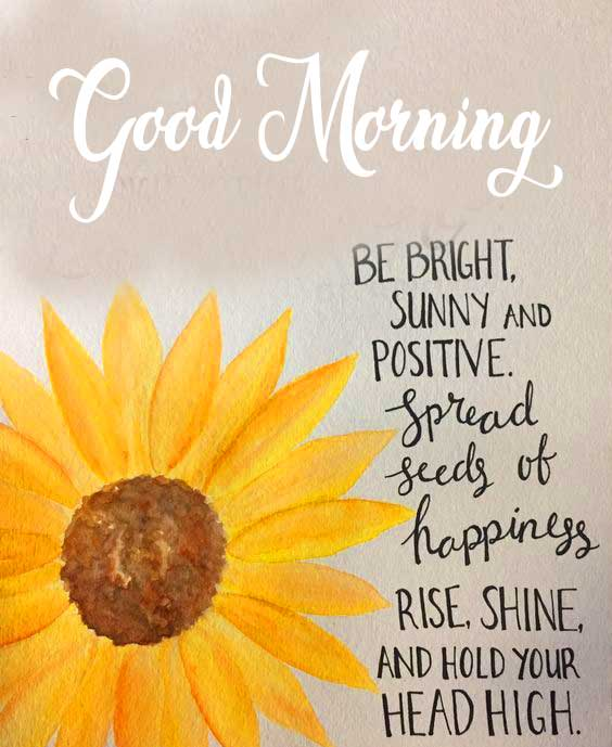 Sunflower Good Morning Pic with a Beautiful Message