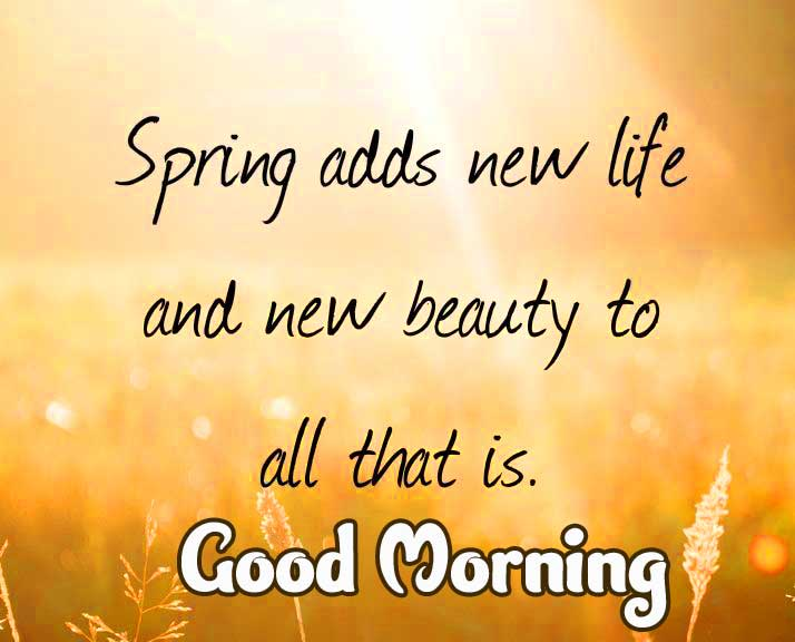 Sunshine Good Morning Image with Quote