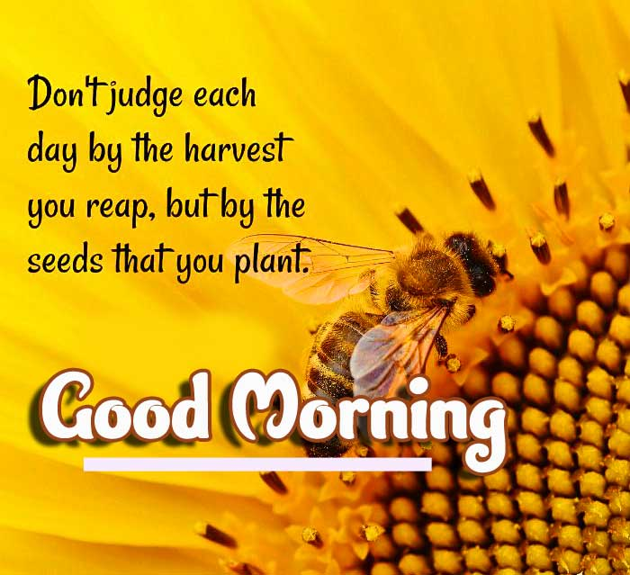 Thoughtful Quote on Bees with Good Morning Picture