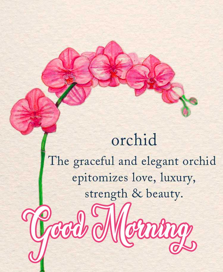 Tiara with Flower and Good Moring Wish