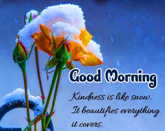 Winter Flower with Good morning Wallpaper