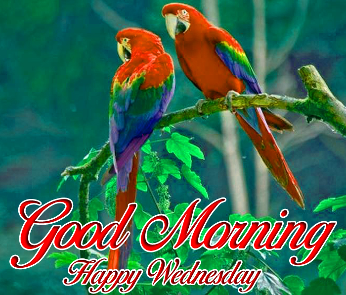 beautiful couple Good Morning Happy Wednesday images hd