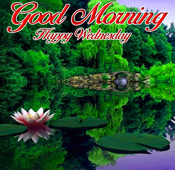 best lotus Good Morning Happy Wednesday images