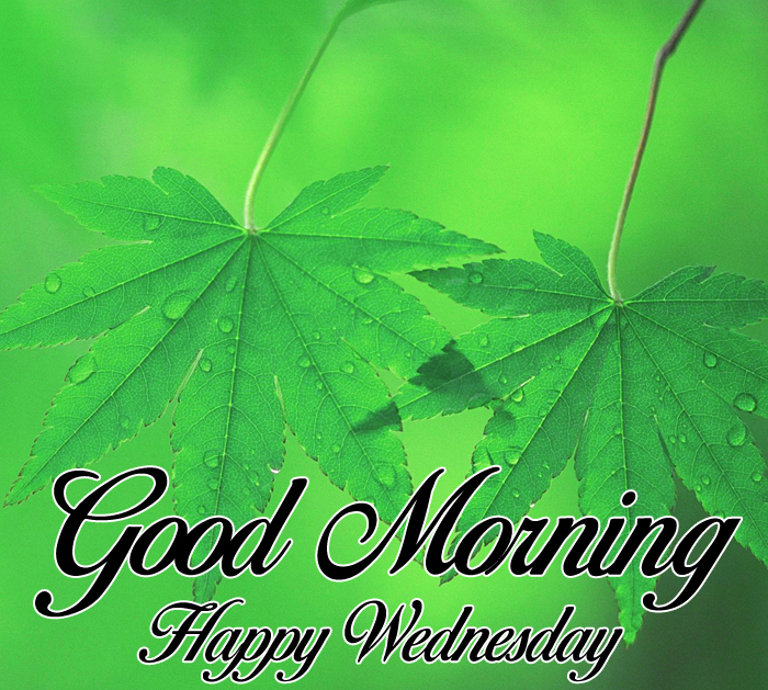 green leaf Good Morning Happy Wednesday images hd