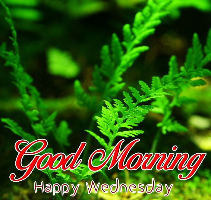 green leaf Good Morning Happy Wednesday wallpaper