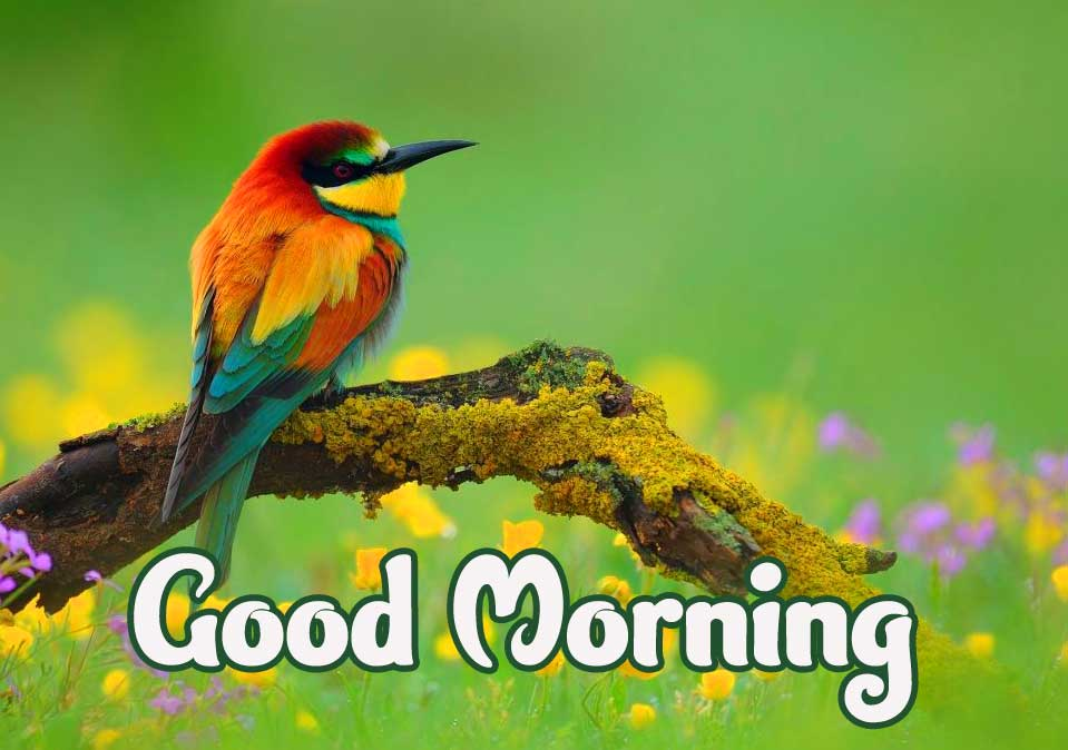 Beautiful Bird with Good Morning Picture