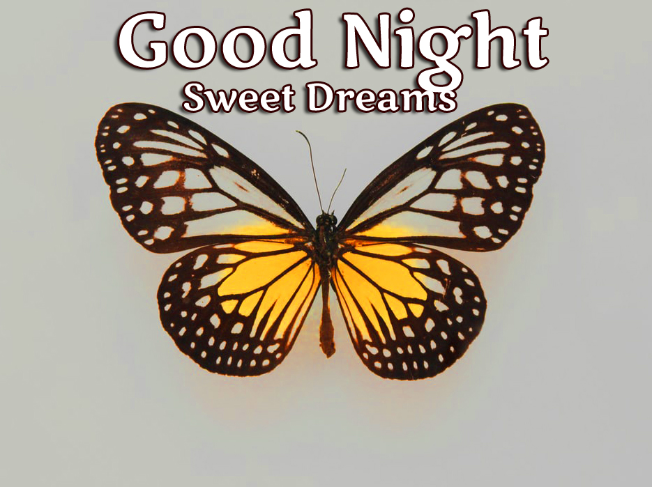 Butterfly Good NightImage