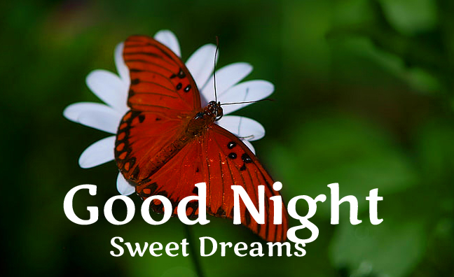 Butterfly on White Flower with Good Night Image