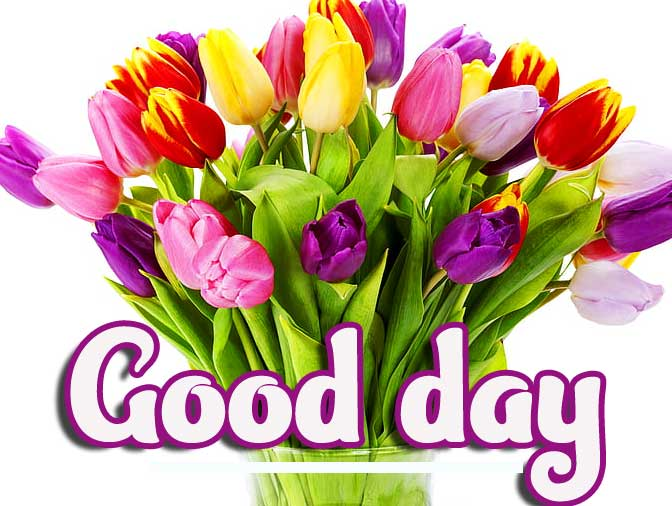 Colourful Tulips with Good Day Wishes