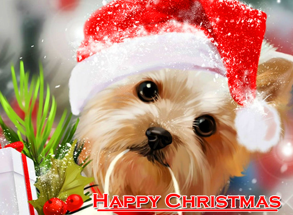 Cute Dog Happy Christmas Image