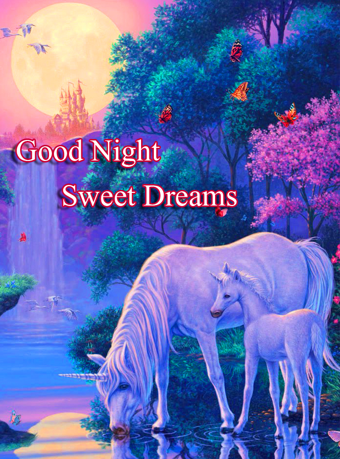 Forest Scenery with Good Night Wishing