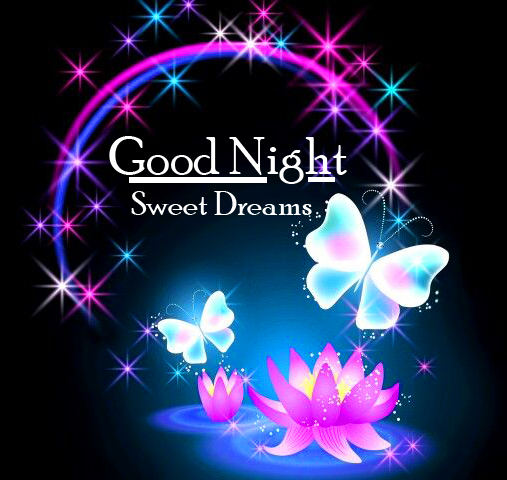 Lovely Night Scenery with Butterfly and Flower Good Night Image