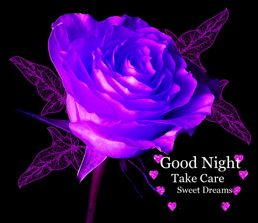Purple Rose with Good Night Wishing