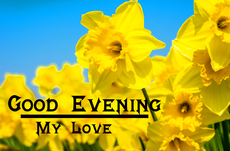 Spring Flowers with Good Evening Wishing