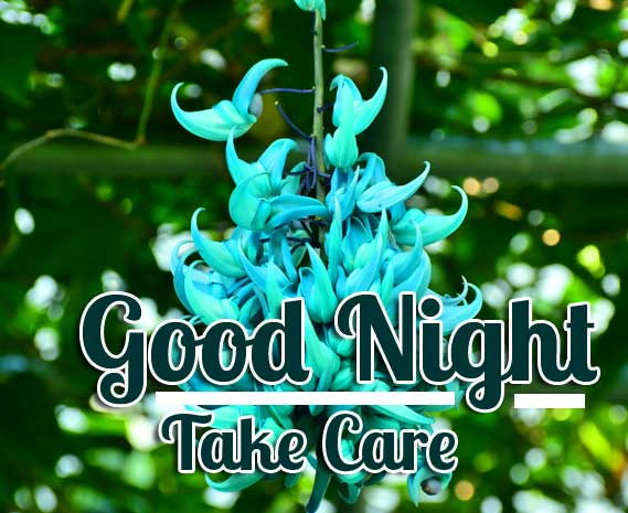 Unique Blue Flower with Good Night Wishing