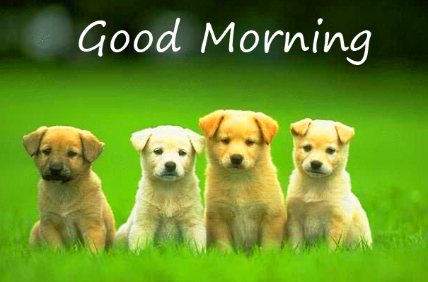 Puppies with Good Morning Wish