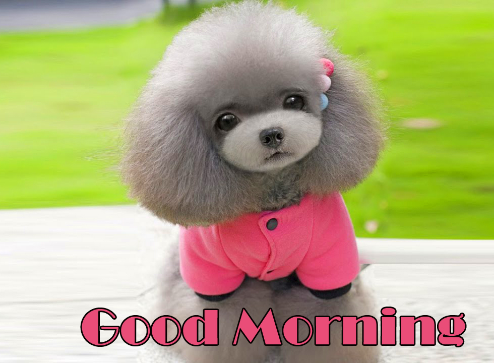 Adorable and Sweet Puppy Good Morning Image
