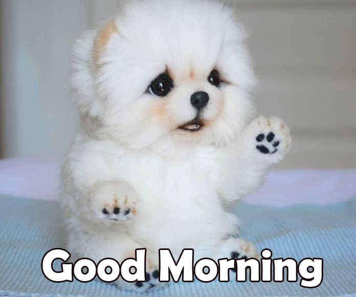 Amazing Puppy Good Morning Image