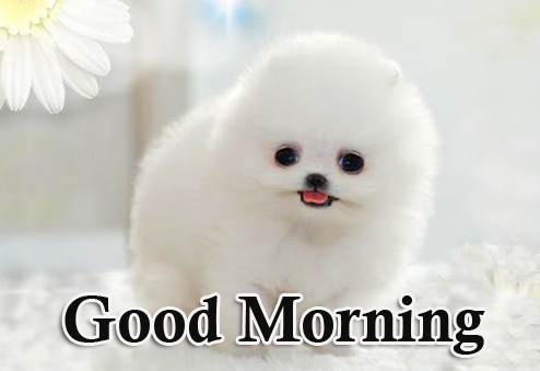 Amazing and Fluffy Puppy Good Morning Image