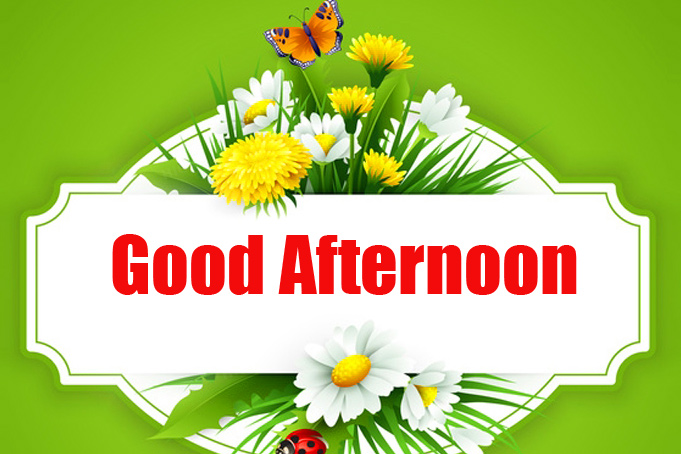 Beautiful Good Afternoon Flowers Image